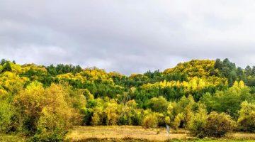 Mengen Köy Manzaraları