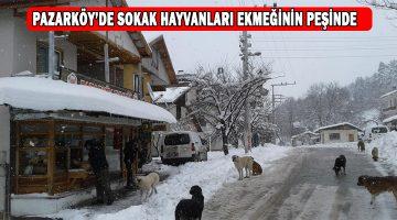 Pazarköy'de Sokak Hayvanları Sahipsiz Değil